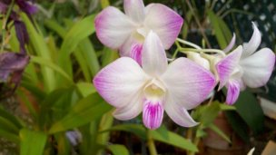 Orchid At Buffalo Botanical Gardens