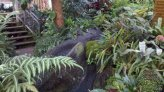 1 Nov 2015 - Buffalo Botanical Gardens