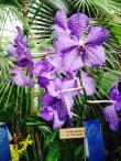 Orchid at Buffalo Botanical Gardens